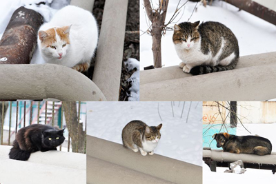 Керамоизол любят кошки он пропускает тепло